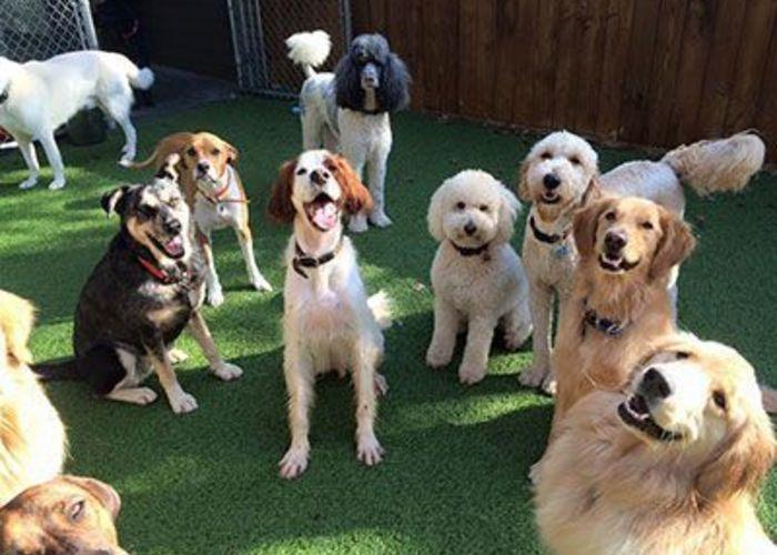 Dog Camp image